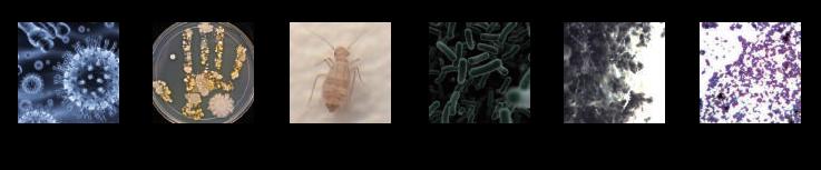细菌图2.png